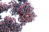 Starszy jagody — Zdjęcie stockowe