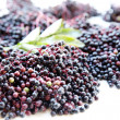 Elder Berries — Stock Photo
