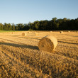 Evening after the Harvest — Stock Photo #42244695
