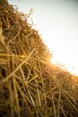 Hay in the sunset	 — Stock Photo