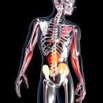 Anatomy - Stomach — Stock Photo