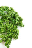 Curled Parsley		 — Stock Photo