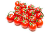 Fresh Tomatoes on the stalk — Stock Photo