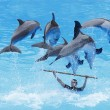Dolphin Show - Stock Photo