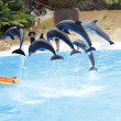 Dolphin Show — Stock Photo #12126212