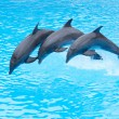 Three Bottlenose Dolphins, Tursiops truncatus — Stock Photo #23893147