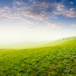 Summer grass field - Stok fotoraf