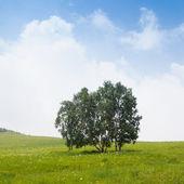 árvore solitária na gramínea — Foto Stock