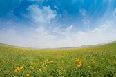 Bright grass — Zdjęcie stockowe