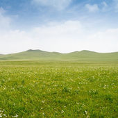 Bright grass — Stock Photo