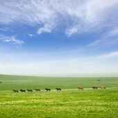 Horse on the grassland — Stock Photo
