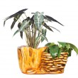 Stock Photo: Potted