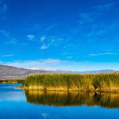 芦苇和湖 — 图库照片