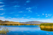 Reeds and lake — Stock Photo