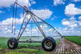 Irrigation of farmland — Stock Photo