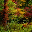 Fall leaves in the Great Smoky mountains — Stock Photo