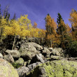 Fall in Colorado — Stock Photo