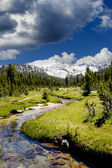A Small Stream in the Sierra Nevadas — Stock Photo