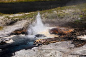 Young Hopeful Geyser — Stock Photo