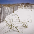 Sand Dunes and Fence at the Beach — Stock Photo