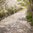 Beautiful Lush Park Walkway — Stock Photo #25084191