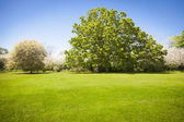 Beautiful Green Grass Field with Blossoming Trees — Stock Photo