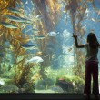 jeune fille debout contre le verre d'observation grand aquarium — Photo