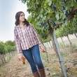 Stock Photo: Young Female Farmer Inspecting Grapes in Vineyard