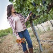 Young Female Farmer Inspecting the Grapes in Vineyard — Stock Photo