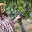 Young Adult Female Farmer Inspecting Grapes in Vineyard — Stock Photo #29863057