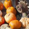 Fresh Fall Pumpkins and Old Rusty Antique Tire — Stock Photo