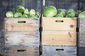 Fresh Fall Gourds and Crates in Rustic Fall Settin — Stock Photo