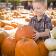 Little Boy Gathering His Pumpkins at a Pumpkin Patc — Stock Photo