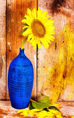Sunflower on a blue vase with an old wood planks background — Photo