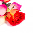 Royalty-Free Stock Photo: Red rose and petals isolated on a white background