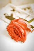 Red rose and old wedding photos — Stock Photo