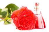 Red rose and a bottle of perfume isolated on white — Stock Photo