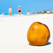 Coconut on a sandy beach in Cuba — Stock Photo