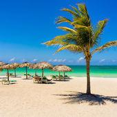 Varadero beach in Cuba with a coconut tree — Stock Photo