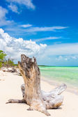Tree trunk at a virgin beach with turquoise water in Cuba — Stock Photo