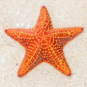 Close-up of a starfish (sea star) — Stock Photo