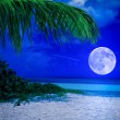 Tropical beach at night with a full moon — Stock Photo