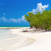 Virgin tropical beach in Cuba — 图库照片