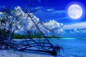 Beach at night with a full moon — Stock Photo