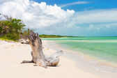 Virgin beach at Coco Key (Cayo Coco) in Cuba — Stock Photo
