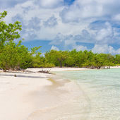 Virgin tropical beach with trees near the water at Coco Key in C — Stock Photo