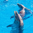 Stock Photo: Dolphins at Miami Seaquarium