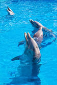 Dolphins at the Miami Seaquarium — Stock Photo