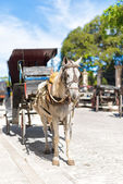 Horse carriage in Old Havana — Stock Photo