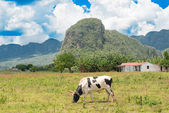 Rural scene at the Vinales Valley in Cuba — Stock Photo